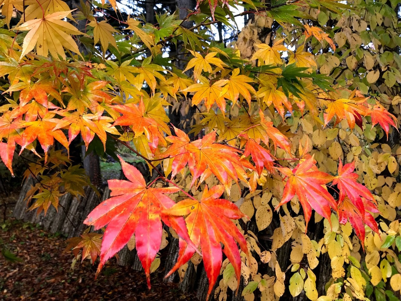 秋深まって、キノコの季節_c0189970_18092257.jpg