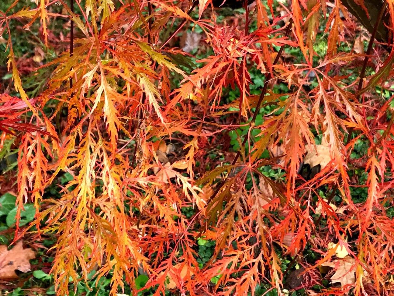 秋深まって、キノコの季節_c0189970_18224795.jpg