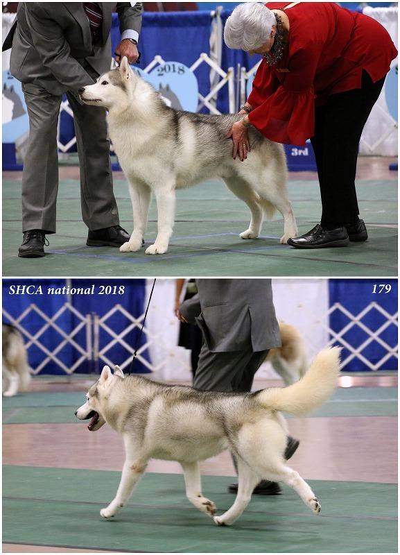 ベテランクラス【全出陳犬画像と動画】 : ハスキーがやってきた
