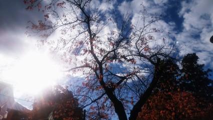 落ち葉散りしく時節_f0168392_19410123.jpg