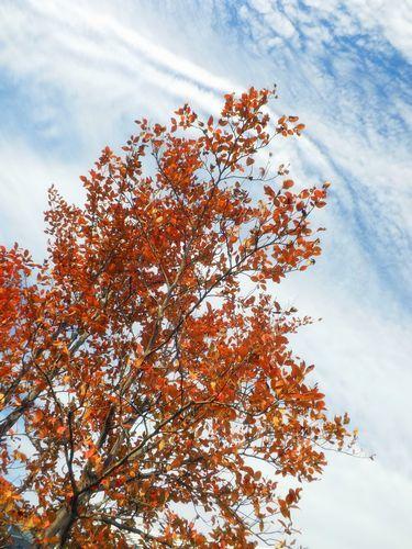 秋っていいな、と思う日に_c0141013_16482586.jpg