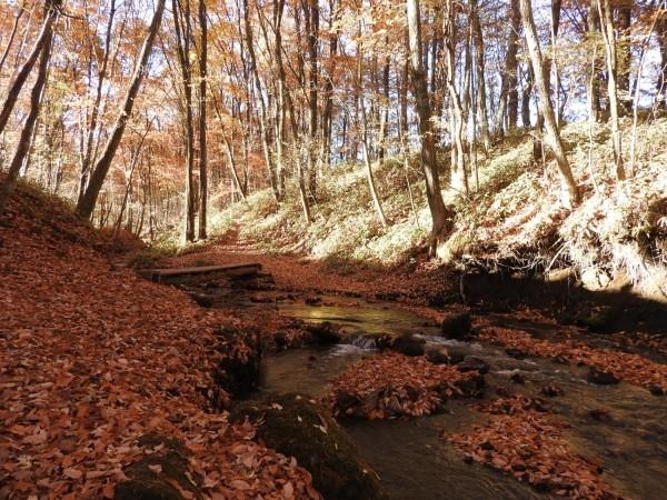 おしぎっぱの森:紅葉だより_b0174425_21462913.jpg