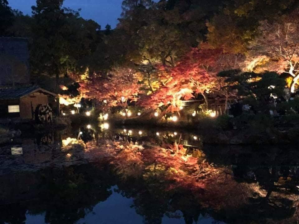 東山動植物園 もみじ狩り&紅葉ライトアップ2018_f0373339_15154583.jpg