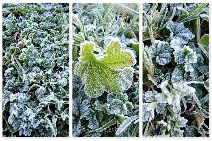 凍ったハロウィン当日_d0356844_03385358.jpg