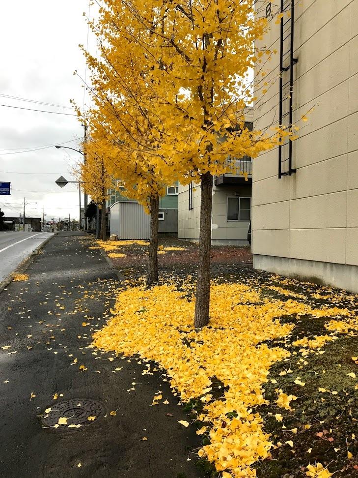 秋深まる、その2_c0189970_08055827.jpg