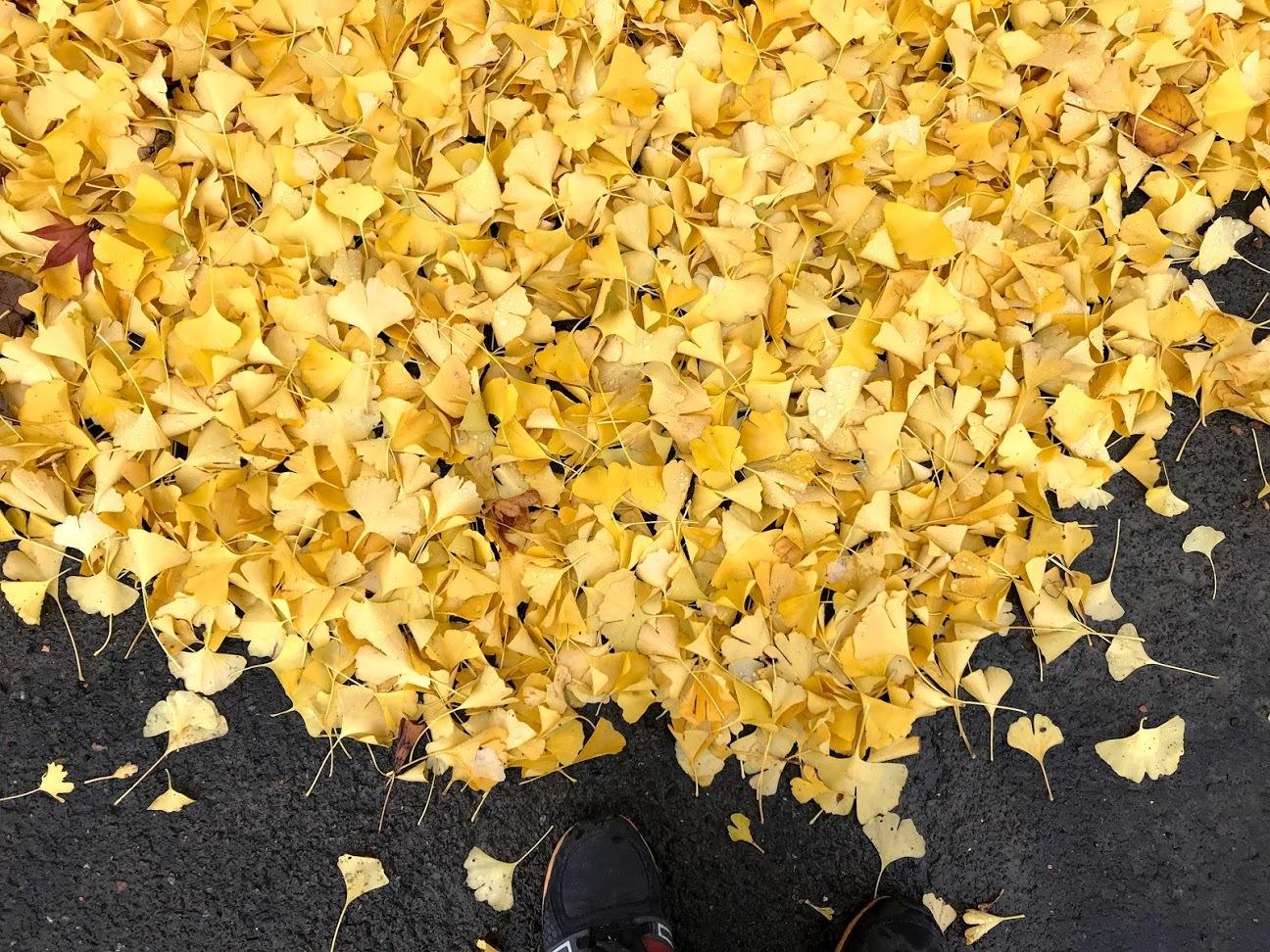 秋深まる、その2_c0189970_08061289.jpg