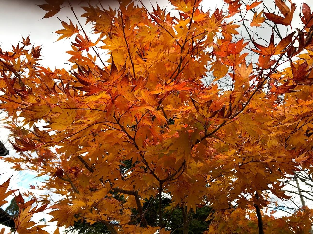 秋深まる、その2_c0189970_08085646.jpg