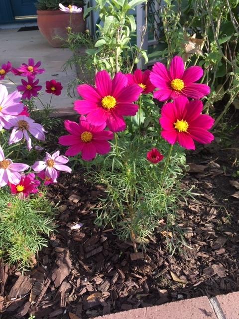 我が家の庭ー秋から冬へ_e0350971_13390482.jpg