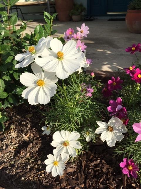 我が家の庭ー秋から冬へ_e0350971_13391760.jpg