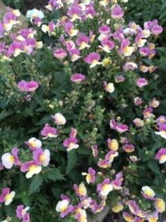 我が家の庭ー秋から冬へ_e0350971_13425168.jpg