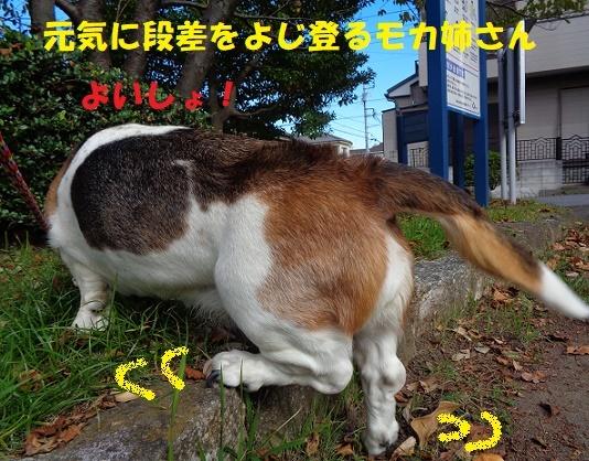 f0121712_00063640.jpg