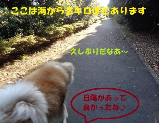 f0121712_22513526.jpg