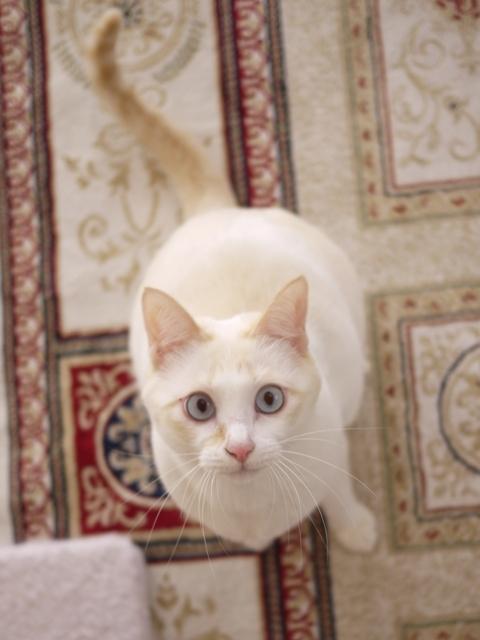 猫のお留守番 ニーナちゃん編。_a0143140_20430574.jpg