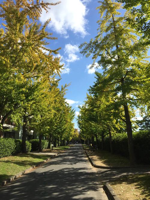 「岡山大学ホームカミングデイ2018」いろんな俳句ができました!_d0336740_11003006.jpg