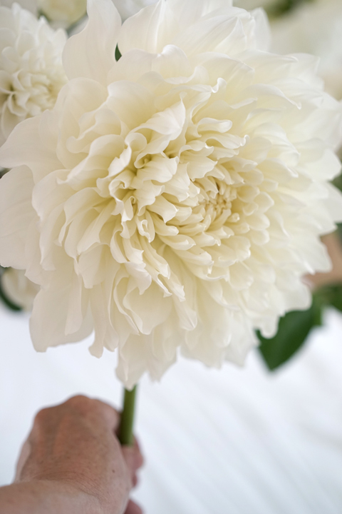 10月のレッスン white bouquet_f0127281_12183799.jpg