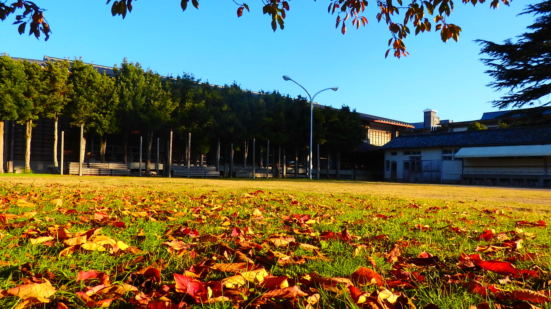 晩秋です!  いい天気です_b0239402_16441957.jpg
