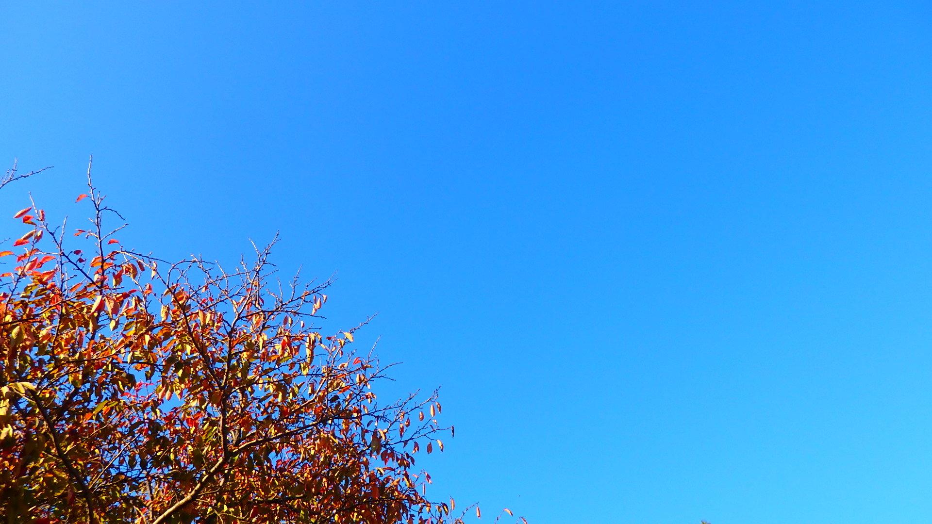 晩秋です!  いい天気です_b0239402_16442892.jpg