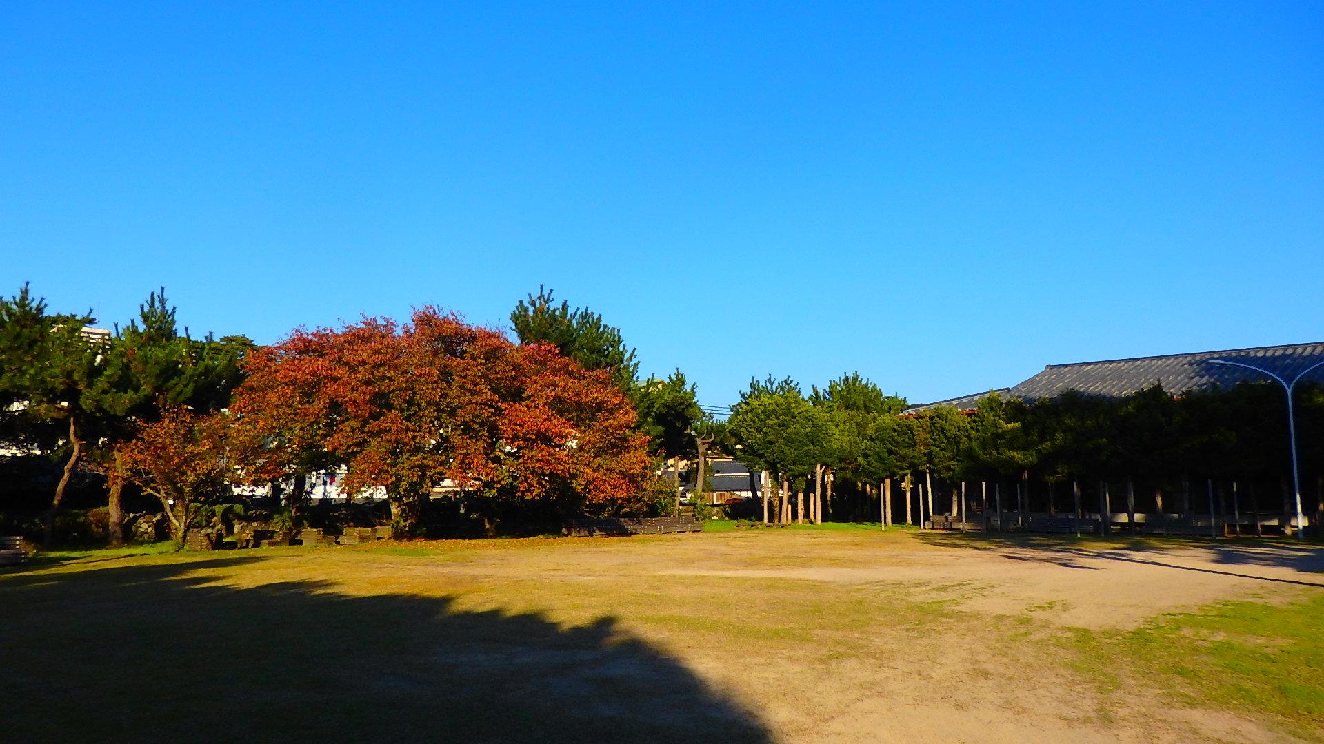 晩秋です!  いい天気です_b0239402_16443211.jpg