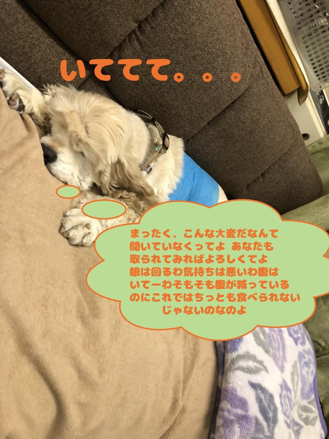 b0067012_20374145.jpg