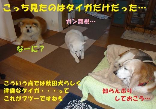 f0121712_13254757.jpg