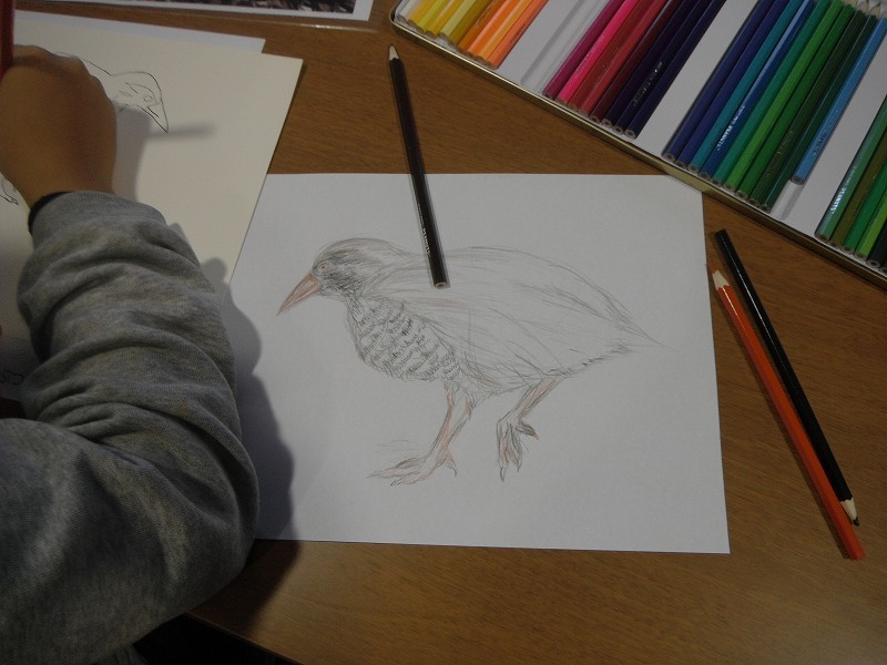 岡田宗徳さんによる「やんばるの動物 お絵かき教室」_f0121321_13022511.jpg