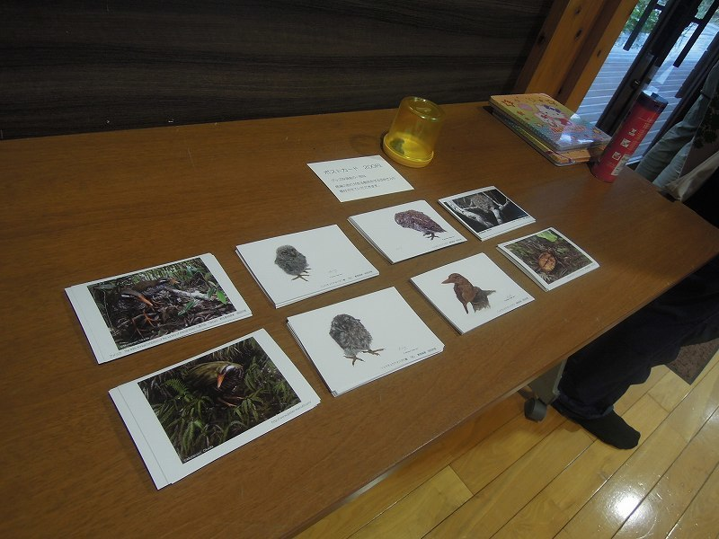 岡田宗徳さんによる「やんばるの動物 お絵かき教室」_f0121321_13072990.jpg