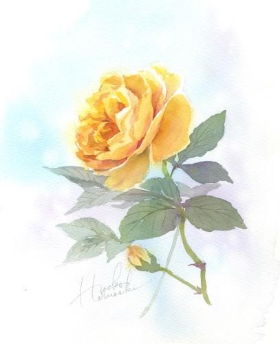 薔薇 水彩画 春崎陽子_f0176370_17283585.jpeg