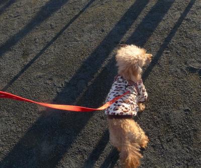 メリちゃんとお散歩/ Walking with my Meri._e0120899_20271873.jpg