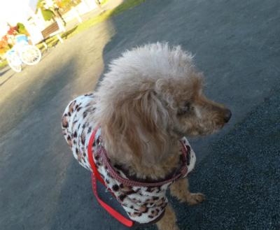 メリちゃんとお散歩/ Walking with my Meri._e0120899_20275481.jpg
