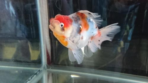 さいたま養殖魚まつり(2018秋)-品評会編_b0298605_18313986.jpg
