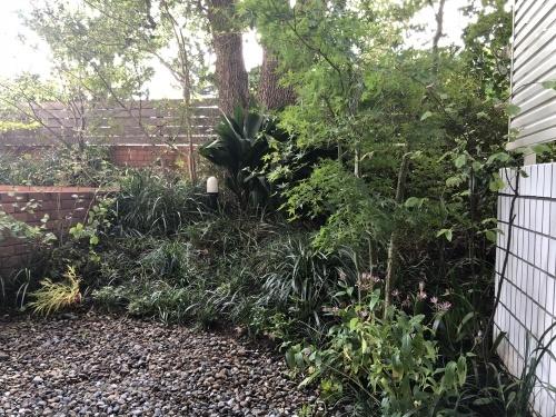 庭を整える_a0148909_10594932.jpg