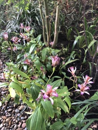 庭を整える_a0148909_11003436.jpg
