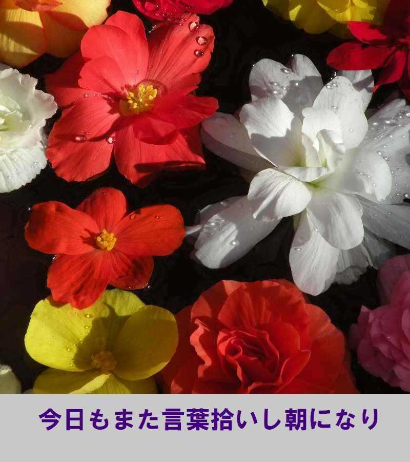 f0117041_06065646.jpg