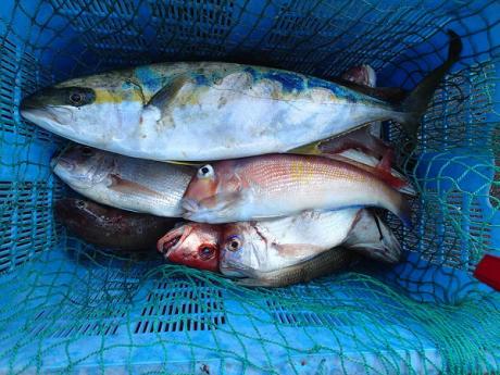つばきマリーナ秋の釣り大会_a0077071_13445216.jpg
