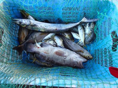 つばきマリーナ秋の釣り大会_a0077071_13472542.jpg