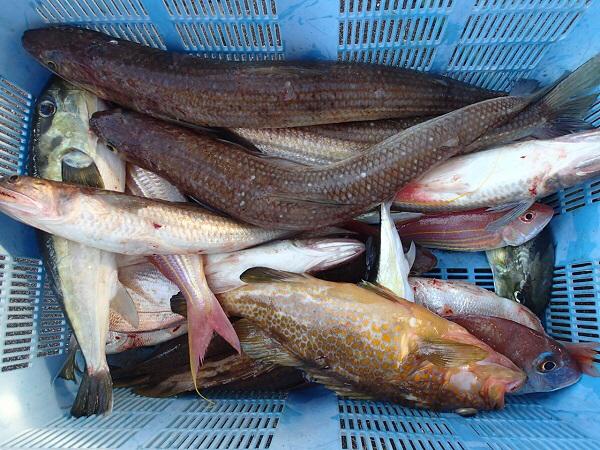 つばきマリーナ秋の釣り大会_a0077071_13544937.jpg