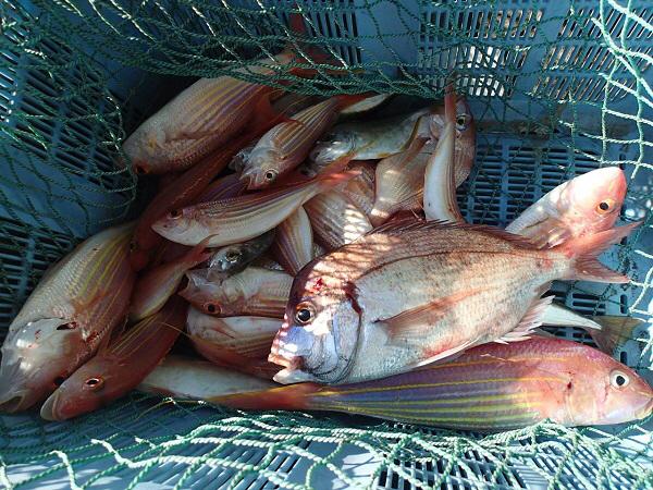 つばきマリーナ秋の釣り大会_a0077071_13554532.jpg