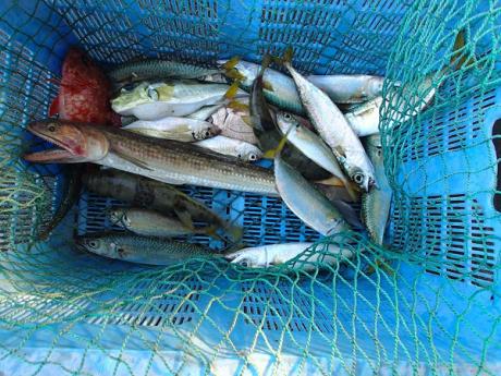 つばきマリーナ秋の釣り大会_a0077071_14081273.jpg