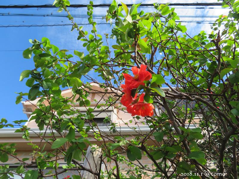 散歩の景色・花々 /小旅その3_f0067179_22065553.jpg