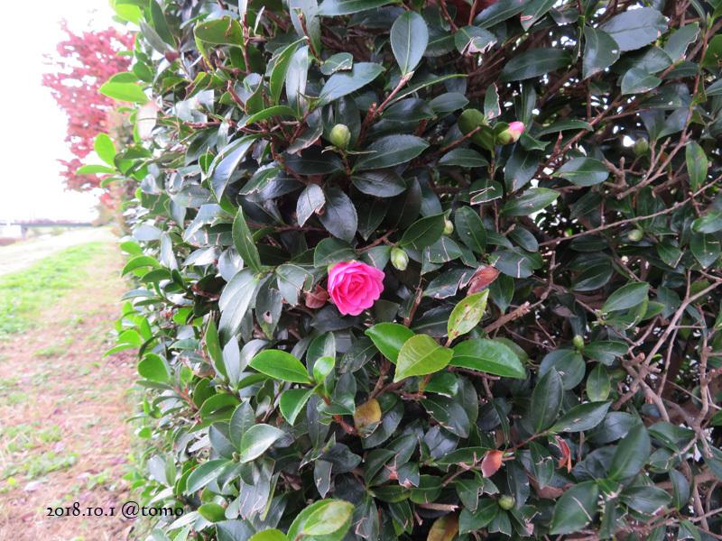 散歩の景色・花々 /小旅その3_f0067179_22072143.jpg
