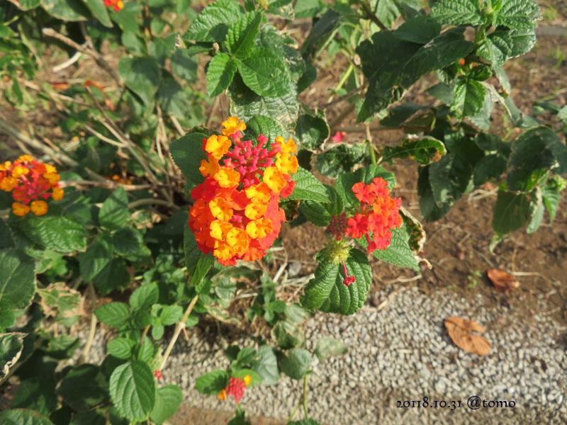 散歩の景色・花々 /小旅その3_f0067179_22073319.jpg