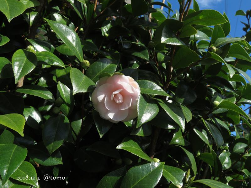 散歩の景色・花々 /小旅その3_f0067179_22074007.jpg