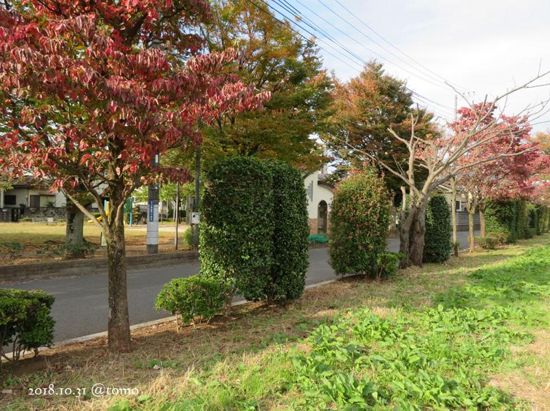 散歩の景色・花々 /小旅その3_f0067179_22083464.jpg