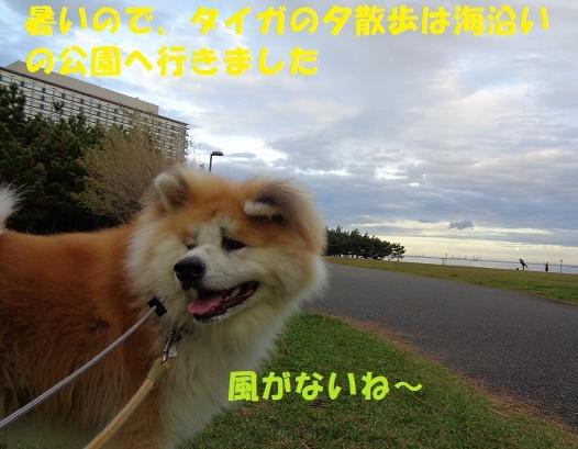 f0121712_00135179.jpg