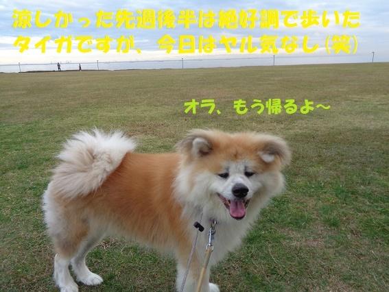f0121712_00135996.jpg