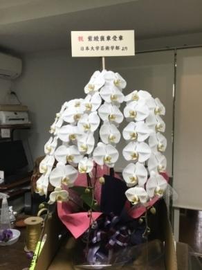 「文化の日」文化勲章受章者宅に胡蝶蘭をお届け。_d0029716_16470702.jpeg