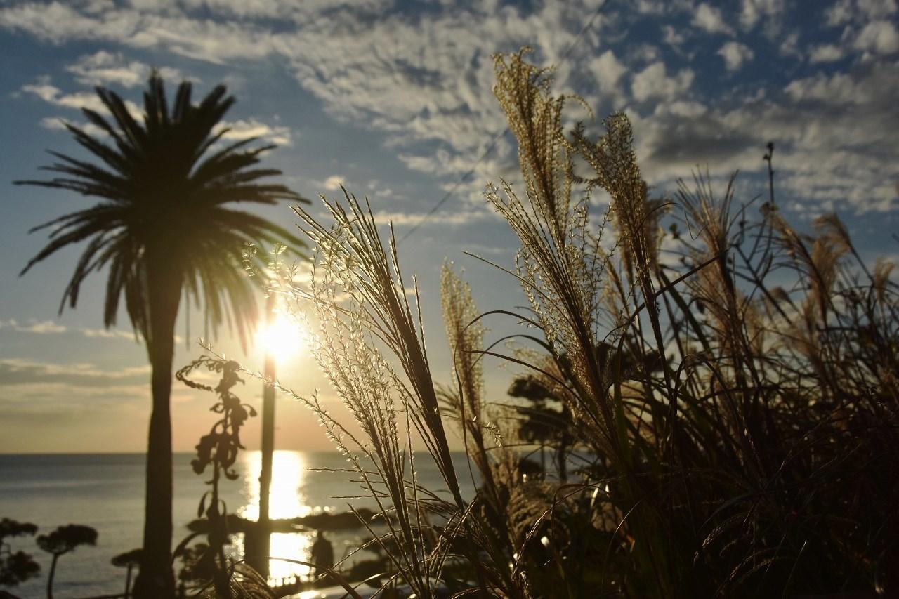 きらめきの芒と海と・・・・_d0065116_19201258.jpg
