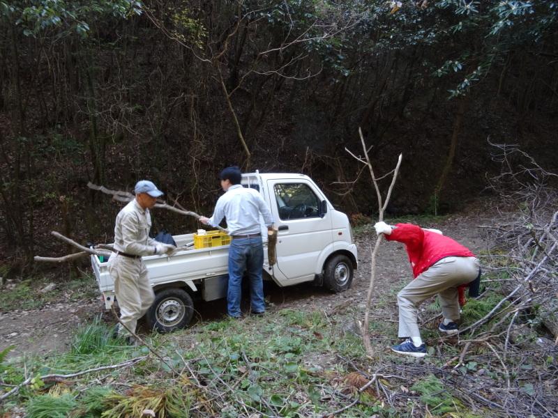 枯れ松 大木の伐採準備・・・孝子の森_c0108460_17550781.jpg