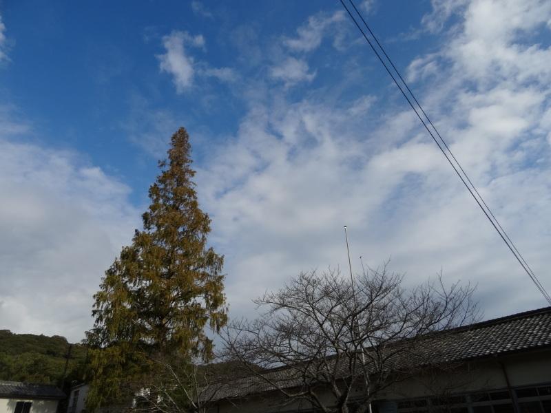 枯れ松 大木の伐採準備・・・孝子の森_c0108460_17555742.jpg