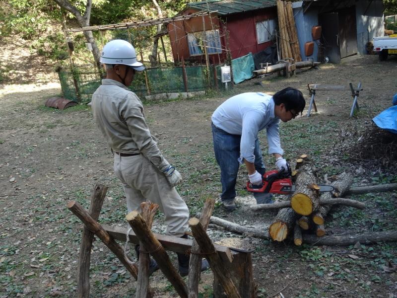 枯れ松 大木の伐採準備・・・孝子の森_c0108460_18052865.jpg